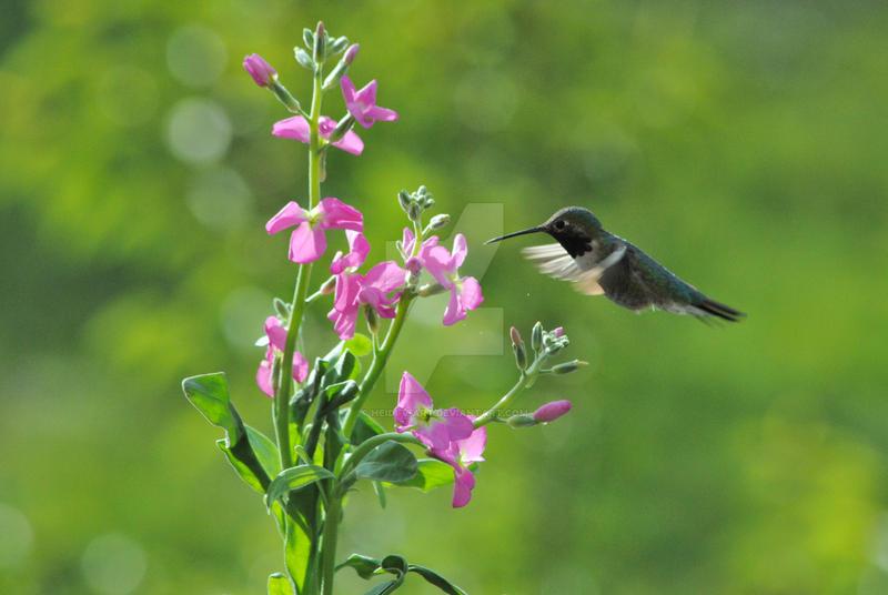 Hummingbird by Heidi-V-Art