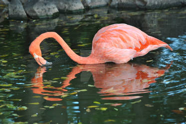 Heart of a Flamingo