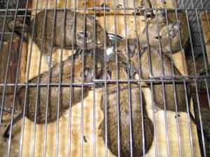 Five Female Furry-Furys