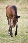 Foal WM 5