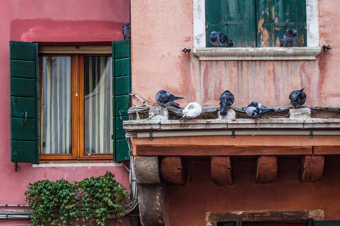 Venetian Pigeons by VillyVilly