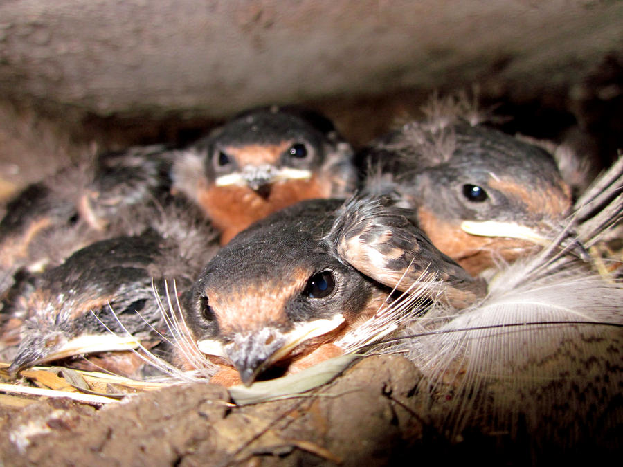 [Image: cute_baby_birds_by_skater4life509-d3lm5r5.jpg]