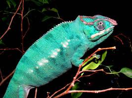 Blue Chameleon by skater4life509