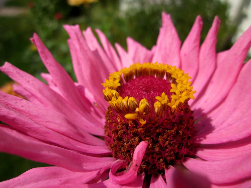 flower by skater4life509