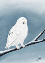 Snow Owl by Plishman