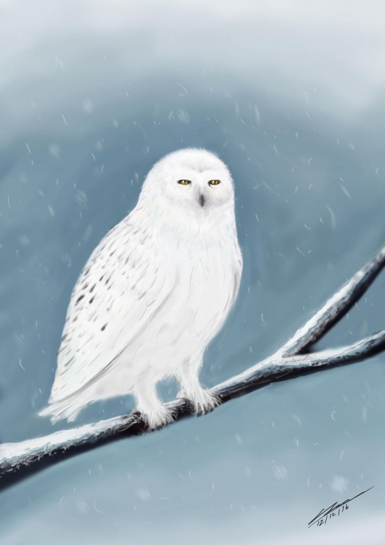 Snow Owl by Plishman