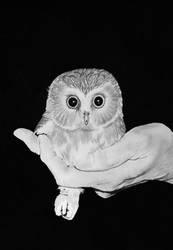 Baby Owl by ByOmer
