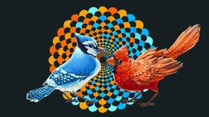 Blue Jay and Cardinal by ManOfGifs