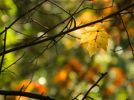 The Last of Autumn.