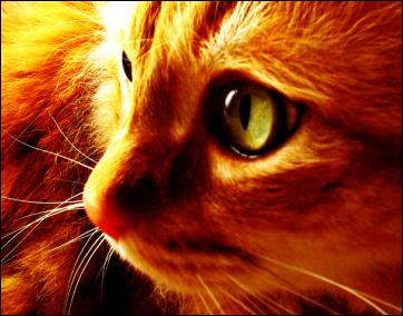 Kittens Light by jmay