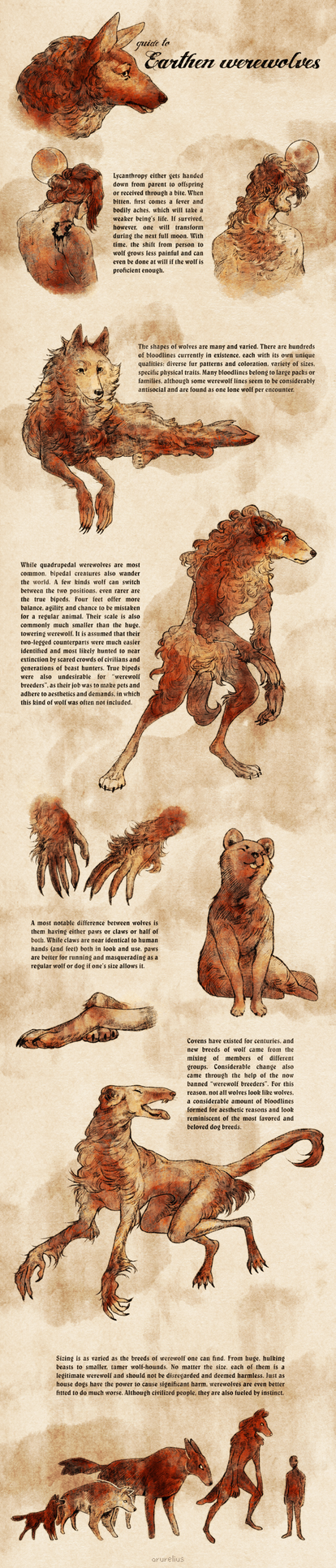 Guide to Earthen werewolves by arurelius