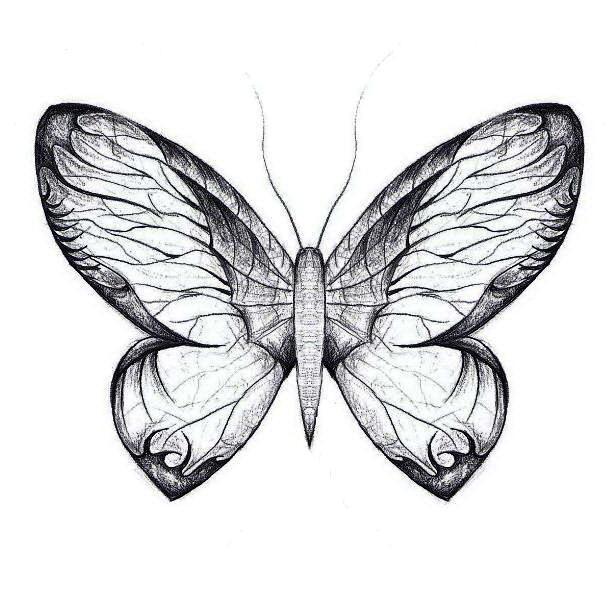 Butterfly-II-