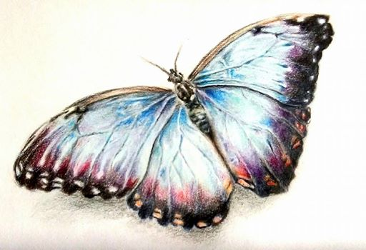 Butterfly pencil drawing by ChloeMal