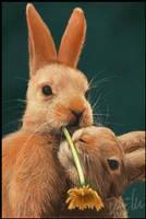 Bunnies by mumblesmarinelli