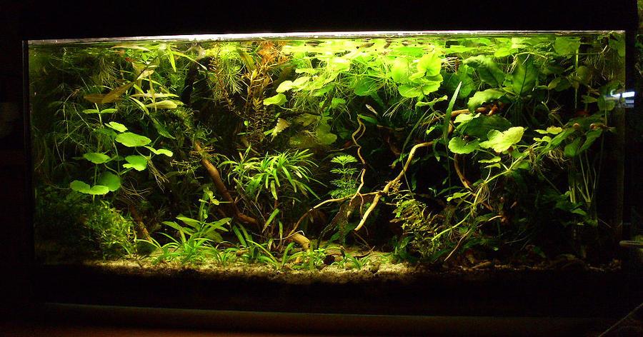 54l fish tank by eonaris on deviantart. Black Bedroom Furniture Sets. Home Design Ideas