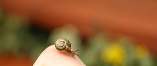 Snail by eonaris