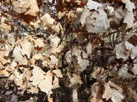 Leaves - Oak by garan-xp