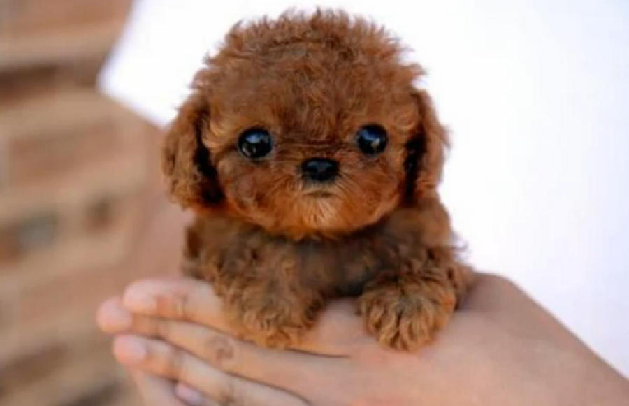 World's Cutest Dog by Coalfire17