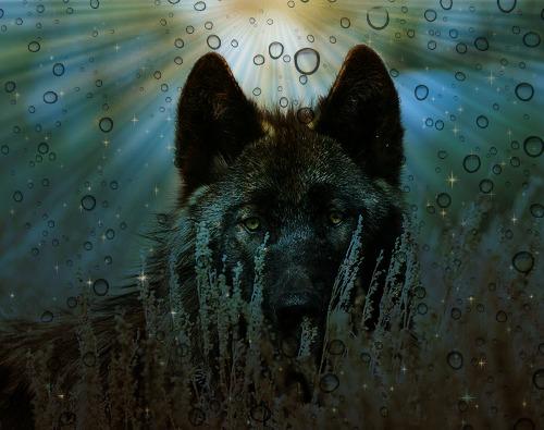Sky Fur 2 by NeonCandyLights