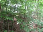 Woods Stock 11