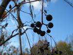 Berries Stock 0001