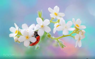 Dresswe Flower Reviews