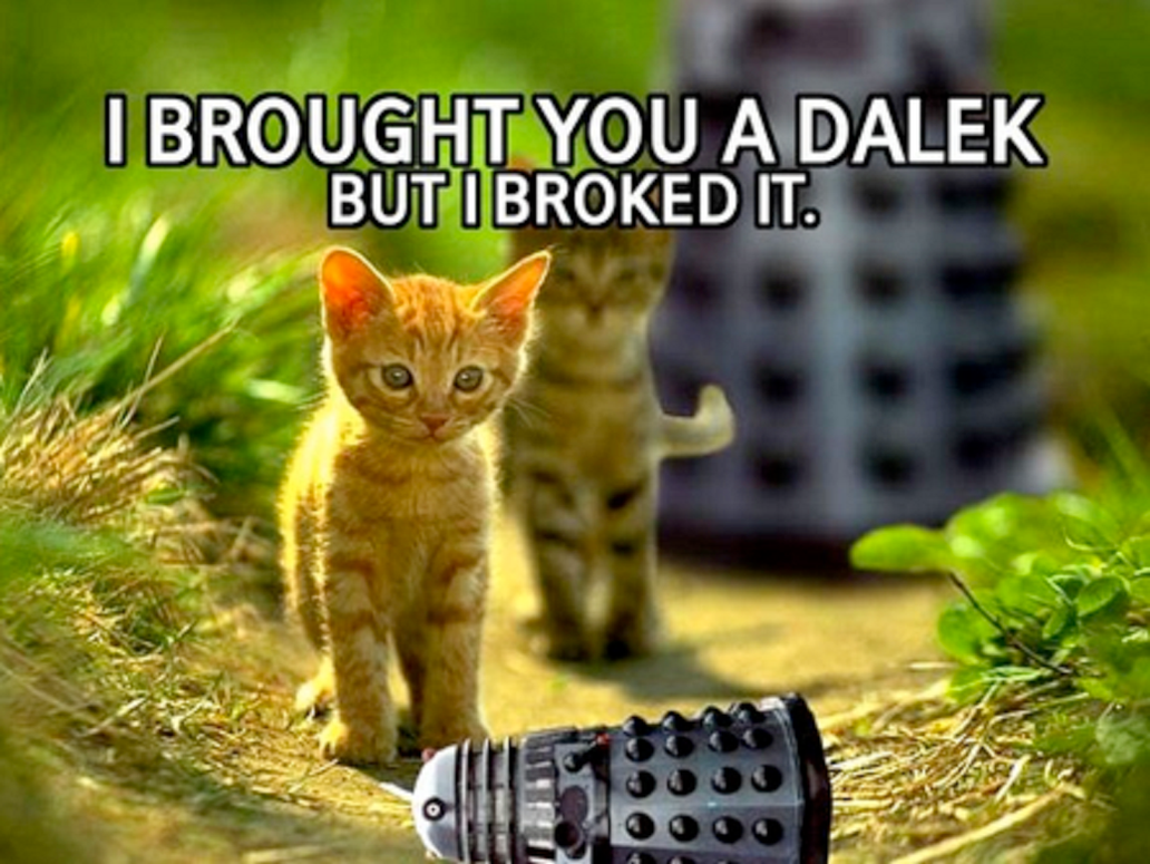 Funny cat with a dalek++ by Werelyokoman