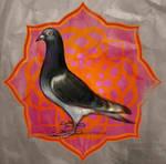 egyptian pigeon by hefne