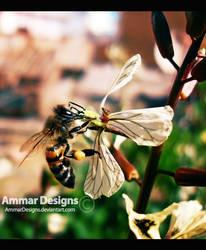 Bee 2 by ammardesigns