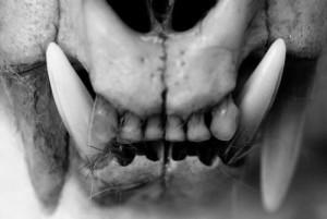 BlackDeathman's Profile Picture