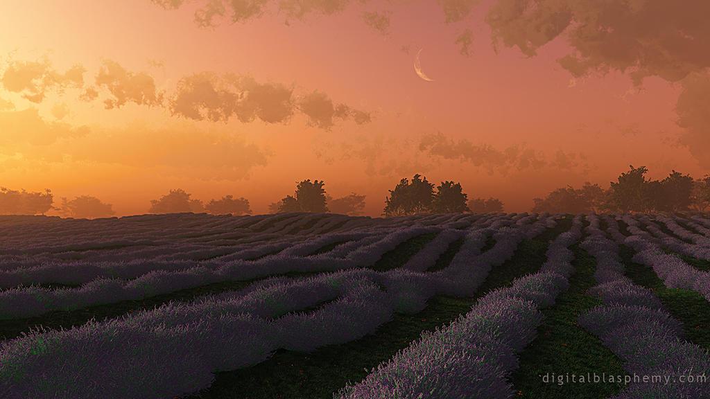 Lavender (Sunset) by dblasphemy