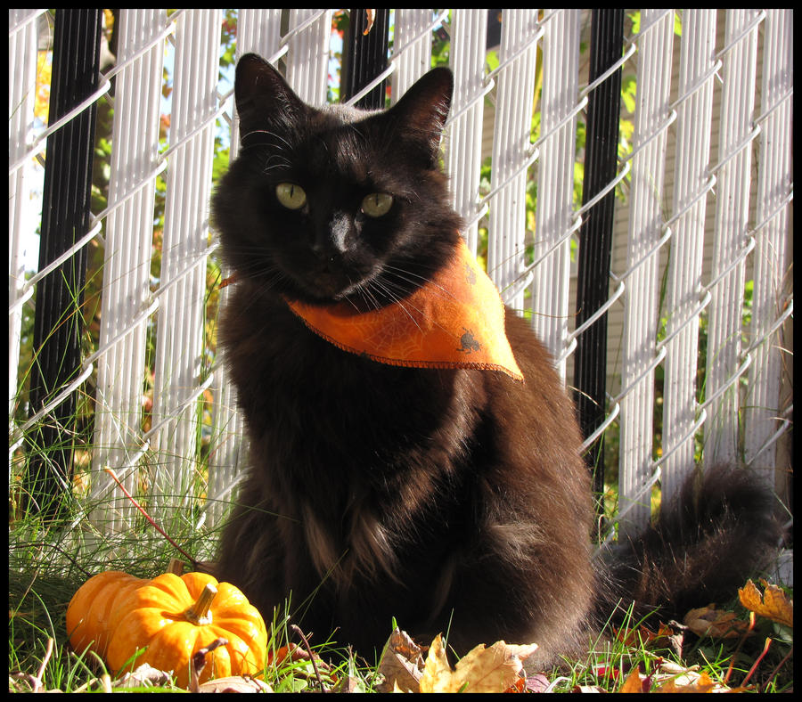 Black Cat For Halloween 1 By MorbidMorticia ...