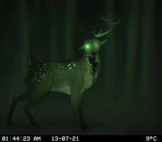 Top 5 Freakiest Trail Cam Images Caught On Tape