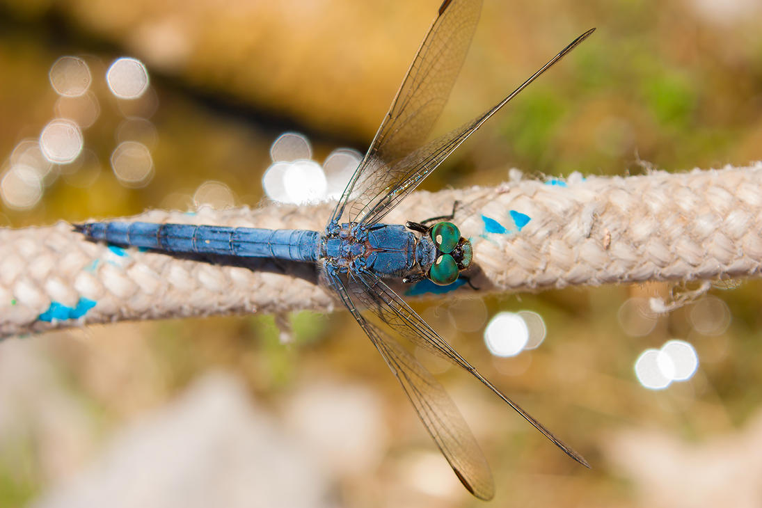 Blue Dragon(fly) by imaagination