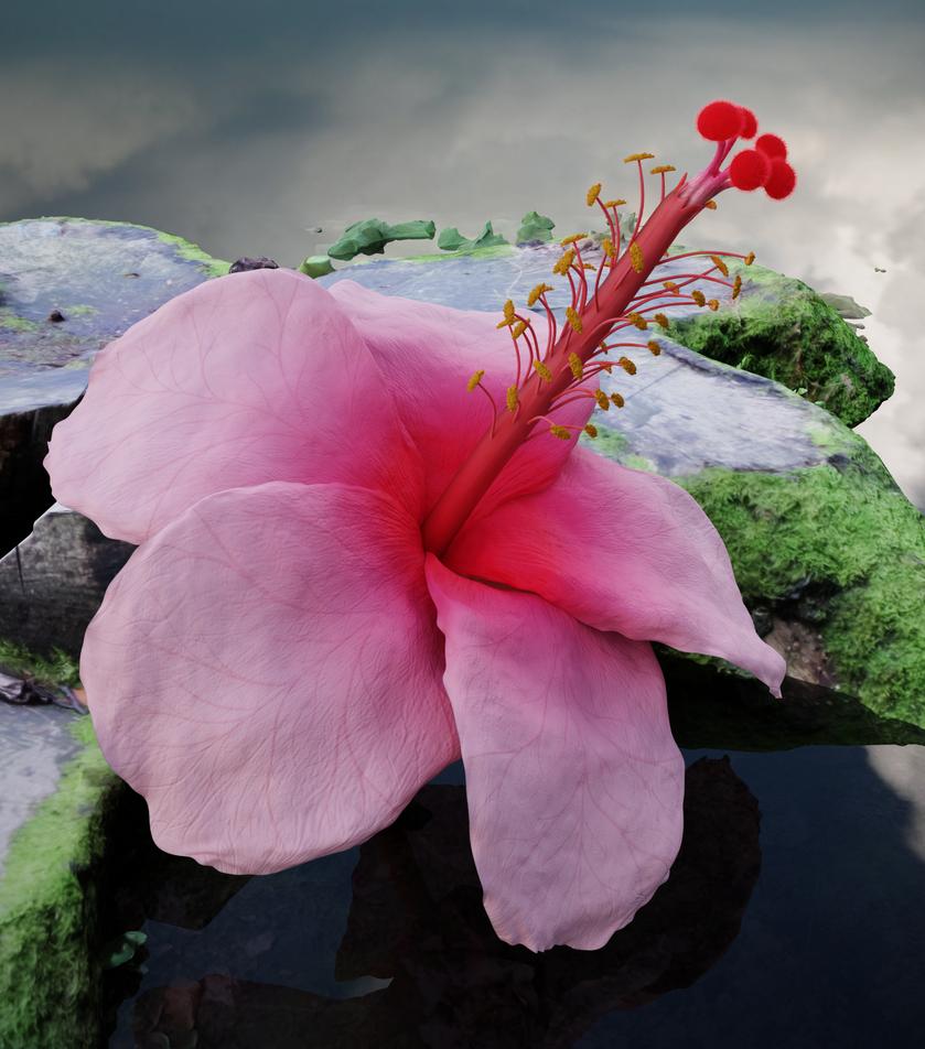 Hibiscus Flower By Gabri239 On Deviantart