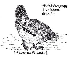 Chicken - Pollo by Bufoland