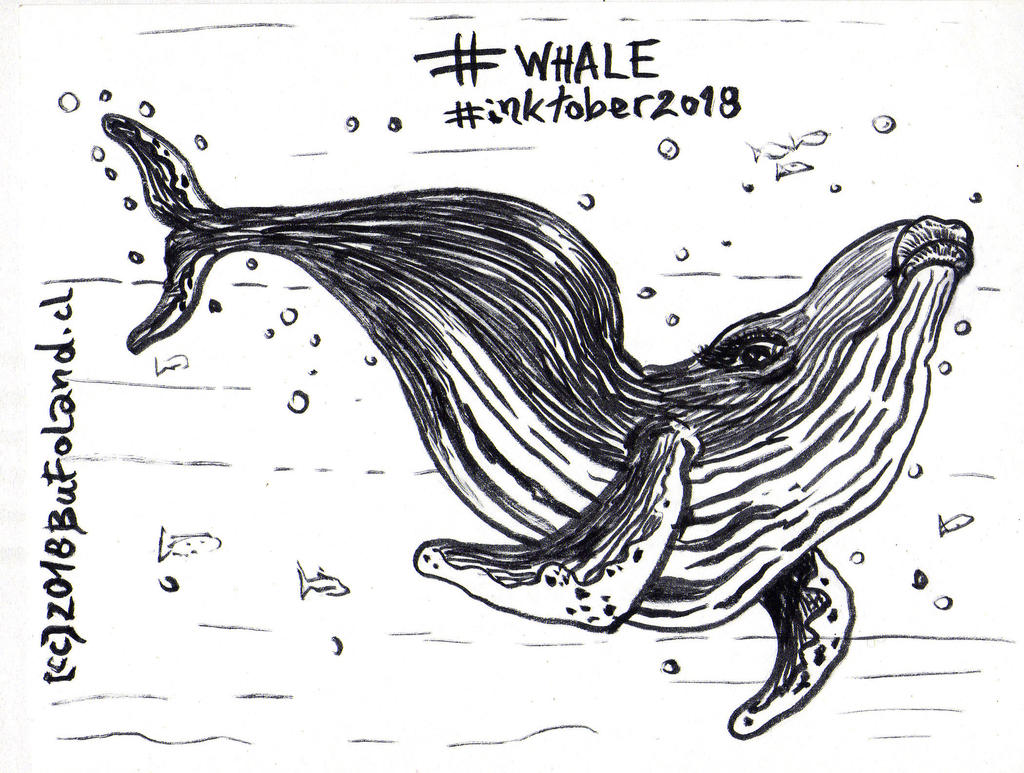 Whale - Ballena by Bufoland