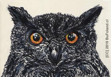 OWL BUHO 20191013