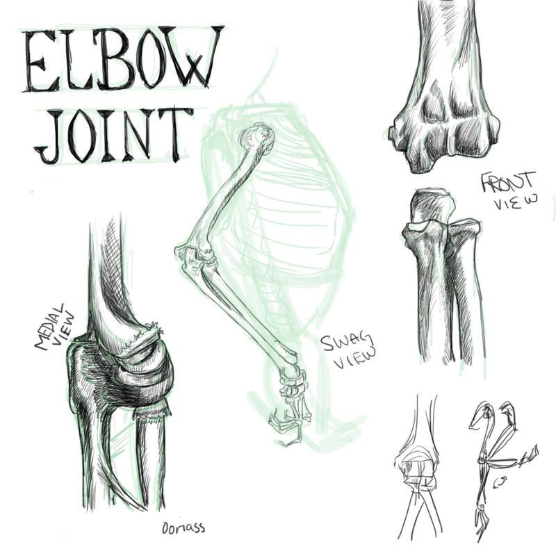 Elbow Joint Anatomy By Sair Oo On Deviantart