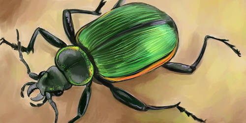 Green Ground Beetle by saeto15