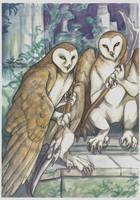 Barn Owls by saeto15