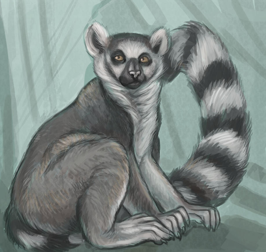 Lemur by saeto15