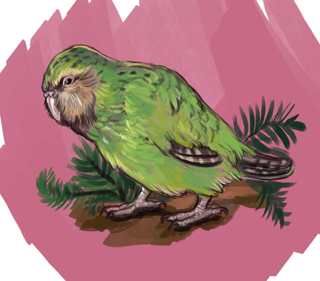 Kakapo by saeto15 on DeviantArt