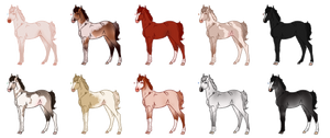 Mixed Foal Batch - All Sold by Miss-Adopts