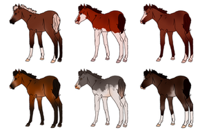 Bay Mix Foals - Sold by Miss-Adopts