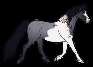 Horse Adopt 315 - Sold