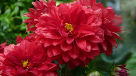 Awesome Red Flowers by crazyal154