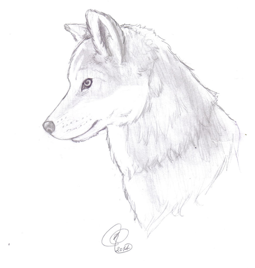 Pin gray wolf coloring page pictures on pinterest for Grey wolf coloring pages