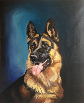 German Sheeperd portrait