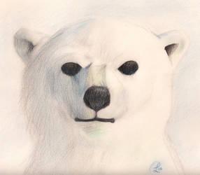 Ursus maritimus- Polar Bear by Amphibizzy